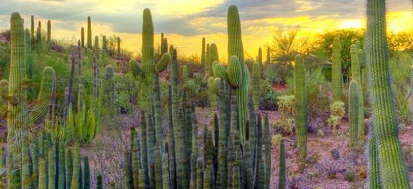 Desert Botanical Garden Free Admission Desert Botanical Garden Free Admission On Tuesday
